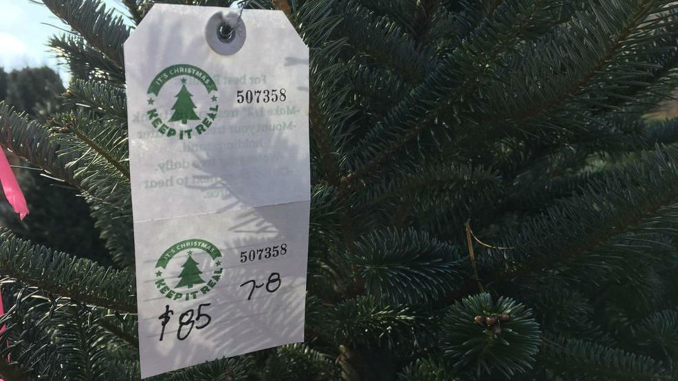 Christmas Tree Shortage.Wnc Christmas Tree Shortage Has Roots In 2008 Recession Wcti